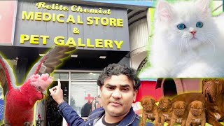 Lucknow Pet shop for Grooming, Vaccination, Accessories, Medicine, clothes | Cat, Dog, birds market.