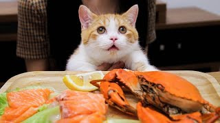 [Cat Live] Jupi is live eating seafood again! A cat from a rich family!