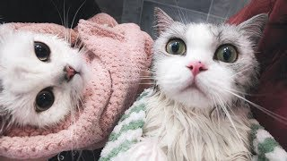 [Cat Live] A big challenge to have my two cats taking shower at the same time