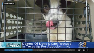 Pets Saved From Texas Storm Now In New Jersey