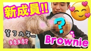 [Breaking News] Muffin has a sister!? Brownie the dog was saved from the breeding ground!