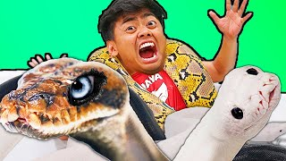 Giant Snake Hot Tub Bath Challenge! - (ft. @JayPrehistoricPets)