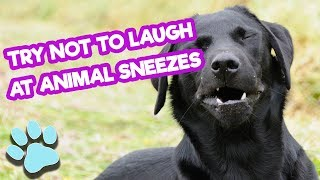 Try Not To Laugh At Animal Sneezes | Funny Pet Compilation | #thatpetlife