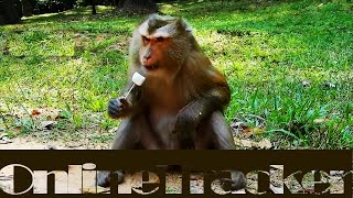 A monkey behaves like a human & more things....