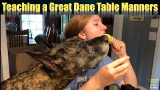 Teaching a Great Dane Table Manners