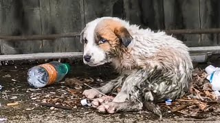 Poor Pup Stuck In The Pipe | 15 Outstanding Animal Rescues