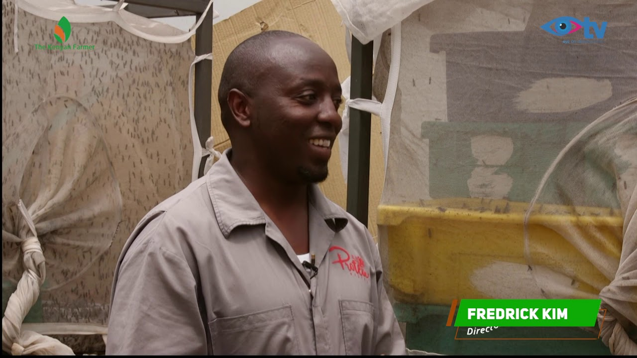 The Black Soldier Fly farming in Kenya - Step by Step by