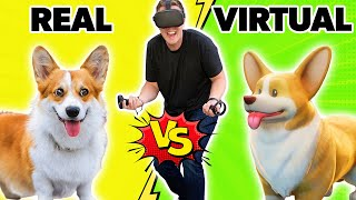 Real vs VR Corgi Challenge - Who's better?