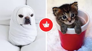 Cute Baby Animals Compilation For Animal Lovers - To Brighten Your Day