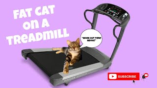 Should My Fat Cat Work Out On The Treadmill?